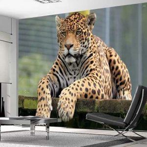 Jaguar Hayvan Duvar Kağıdı