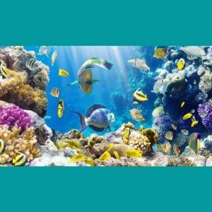 Deniz Balık Alemi