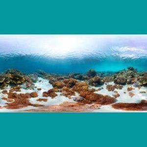 Deniz Doğası