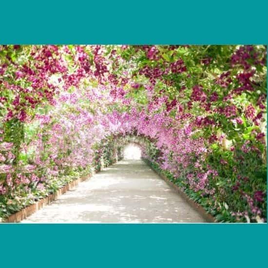 Çiçek Bahçesi Yolu