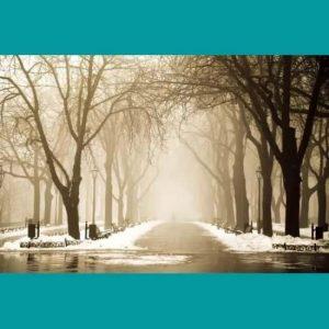 Kış Ağaçlar