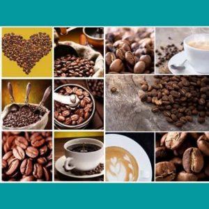 Kahve Oluşumu