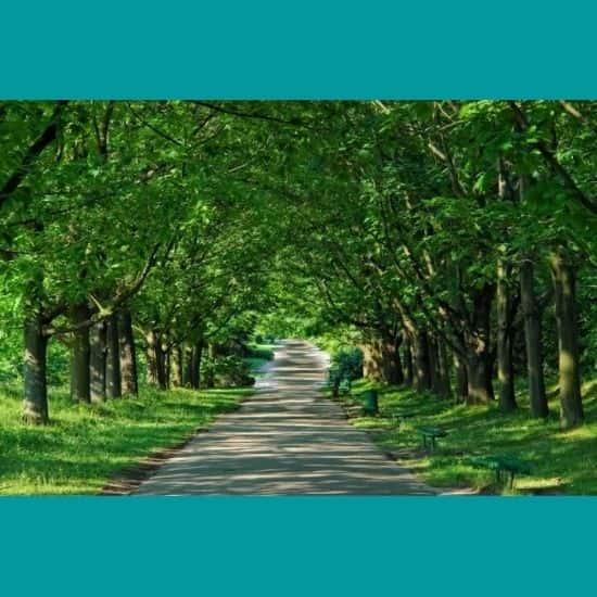 Ağaçların Gölgesinde Yol