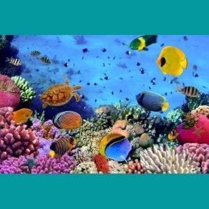 Balık Çeşitleri Deniz Doğası