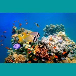 Balık Türleri Deniz Doğası