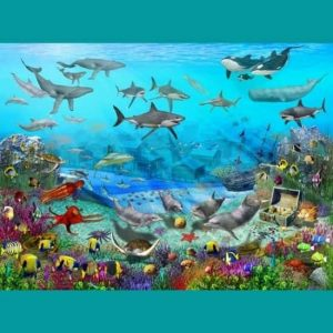 Yunuslar Renkli Deniz Doğası
