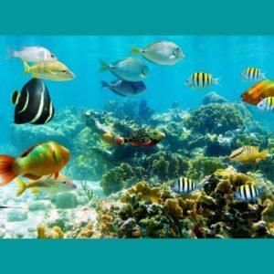 Akvaryum Balıkları