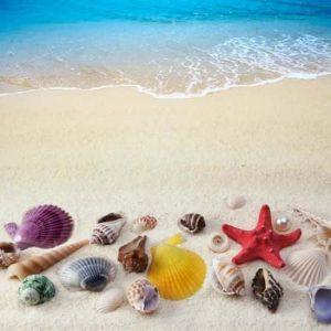 Deniz Yıldızı Deniz Kabukları